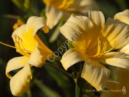 Yellow Flower- #01344_1